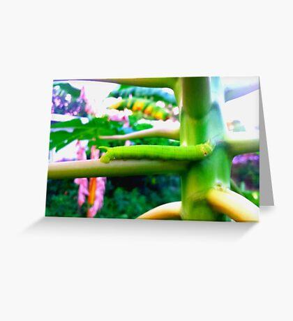 Green Papaya Caterpillar Greeting Card