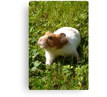 This is an unusually large cage... Canvas Print