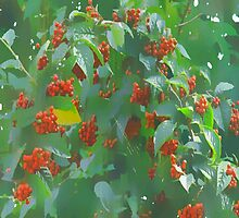 Red Berries Tree by OlaG