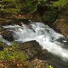 Laurel Creek Cascade by Gary L   Suddath