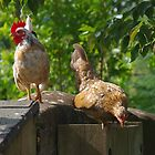 A Poultry Pair by lezvee