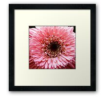 In the Pink!! Framed Print