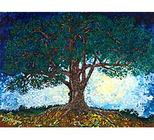 Luna Tree Photographic Print