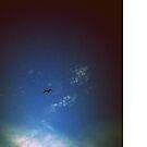 Lone Gull by Littlehalfwings