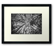Soaring Cypress Framed Print