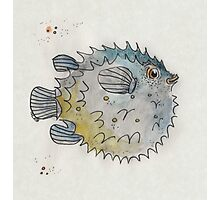 Puffer fish Photographic Print