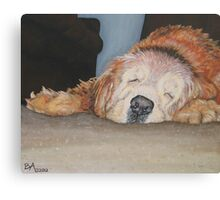 A Gentlemen's Nap Canvas Print