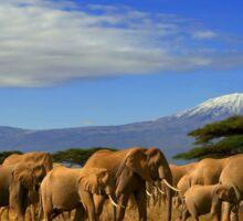 Kilimanjaro And Elephants Sticker