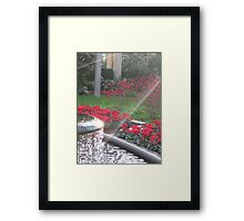 Sunshine Playing in the Fountain Framed Print