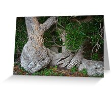 Fallen tree Greeting Card