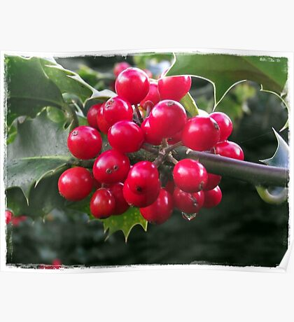 Winter Holly Poster