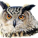Owl watercolor art front face view by Sarah Trett