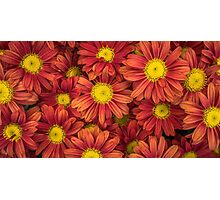 Beautiful Flower Floral Patterns Photographic Print