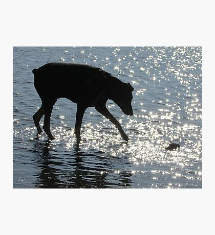 Doberman Silhouette Photographic Print