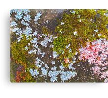 Nature's Abstract World Canvas Print