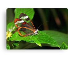 Greta Oto - Glasswing Canvas Print