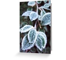Frosted Leaves in the Woods Greeting Card