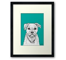 Border Terrier Portrait Framed Print