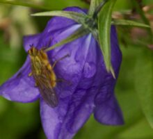 Fly on a Bluebell Flower  Sticker