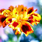 Sunny Marigold by Kasia-D