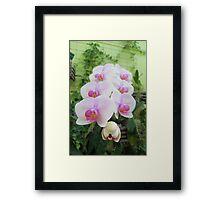Burst of Orchids Framed Print