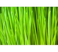 Fresh Wheatgrass background Photographic Print