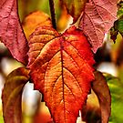 Foliage Fractals... by Poete100