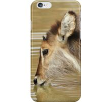 Waterbuck Gold - Pleasure of Life iPhone Case/Skin