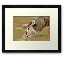 Waterbuck Gold - Pleasure of Life Framed Print