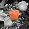 SELECTIVE COLOR OF FLOWERS PHOTOGRAPHY