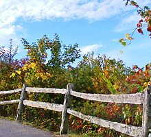 WEATHERED SPLIT RAIL FENCE & FALL COLORS by CHERIE COKELEY