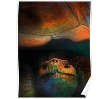 Turtle Oil Painting Acrylic Animals Reptile Wild life nature sea landscape Poster
