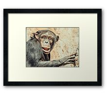African Chimpanzee In Tree Portrait Framed Print