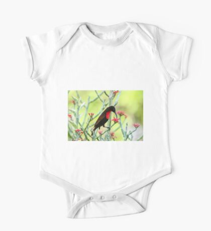 Close-up of Scarlet-chested Sunbird (Nectarinia senegalensis) One Piece - Short Sleeve