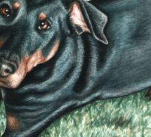 Dobermann Dog Portrait Sticker
