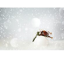 Christmas Decoration with White Bauble Photographic Print