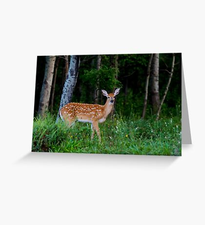 White-tailed fawn in the forest Greeting Card
