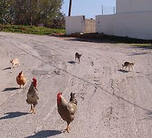Herding Chickens by Francis Drake