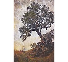 Old tree with tangled roots Photographic Print