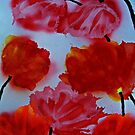Rubeum Tulipa Abstracta by George Hunter