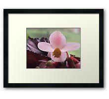 Pink Iridescence  Framed Print