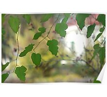 green fall leaves Poster