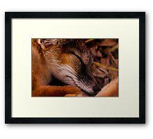 Animals - Night Night Mr Fox Framed Print