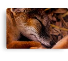 Animals - Night Night Mr Fox Canvas Print