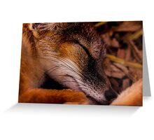 Animals - Night Night Mr Fox Greeting Card