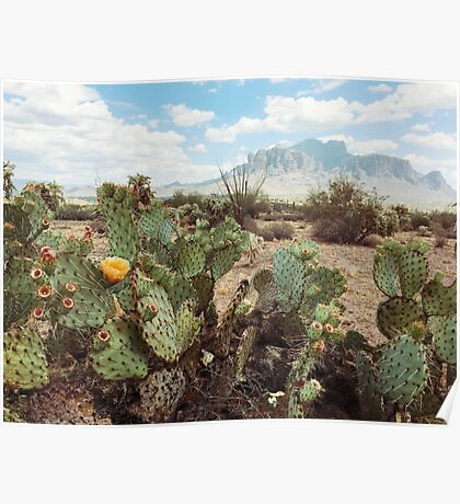 Superstitious Arizona Desert Mountain Cactus Bloom Poster