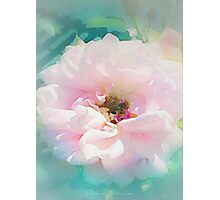 Lovely thing a Rose is. Photographic Print