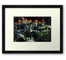 beetroot Framed Print