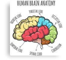 Human Brain Anatomy Sketch Canvas Print