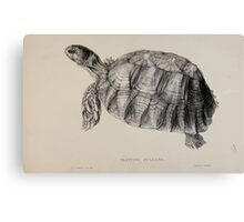 Tortoises terrapins and turtles drawn from life by James de Carle Sowerby and Edward Lear 019 Canvas Print